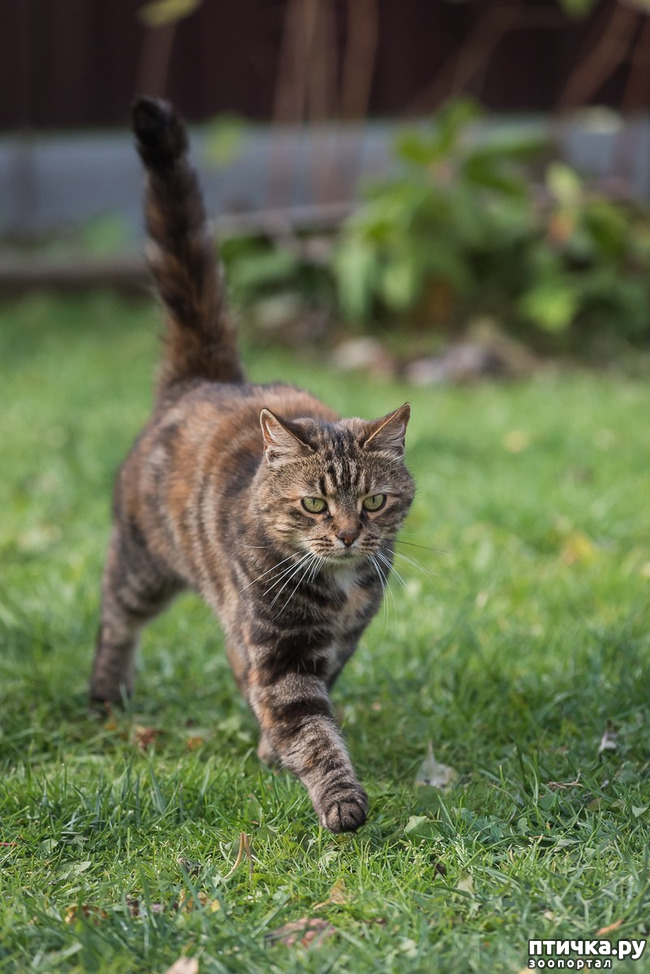 фото 5: Позвольте вам представить кошечку!