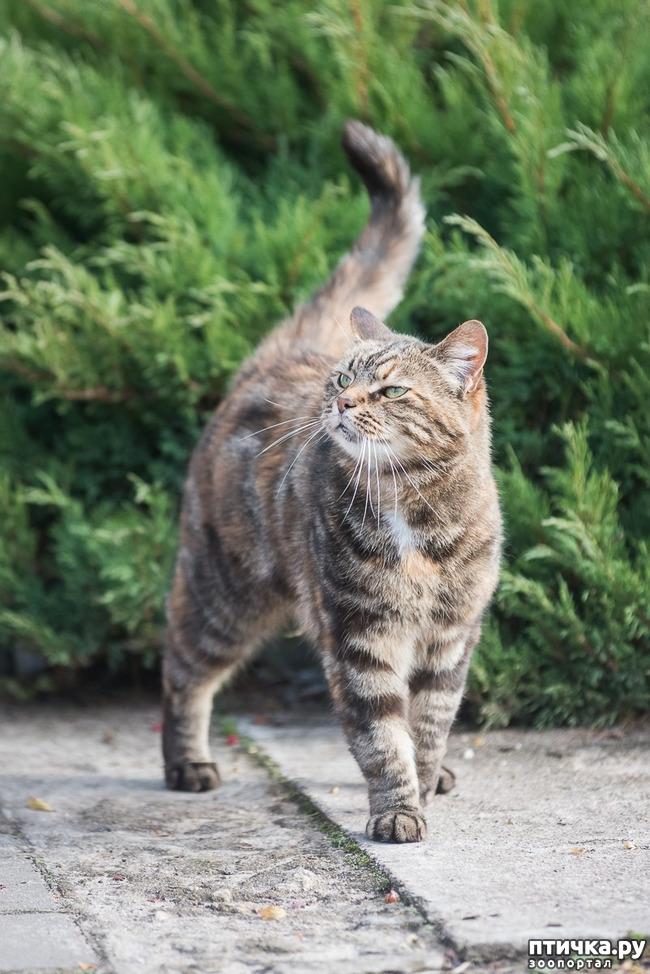 фото 7: Позвольте вам представить кошечку!