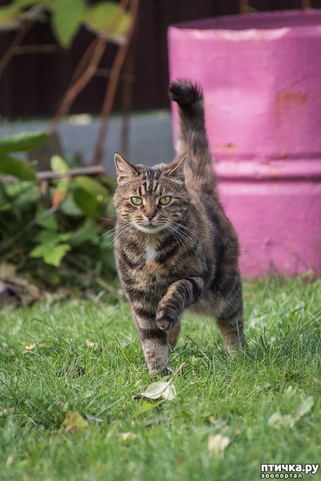 фото 4: Позвольте вам представить кошечку!