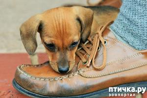 фото: Как отучить собаку прыгать на хозяина?