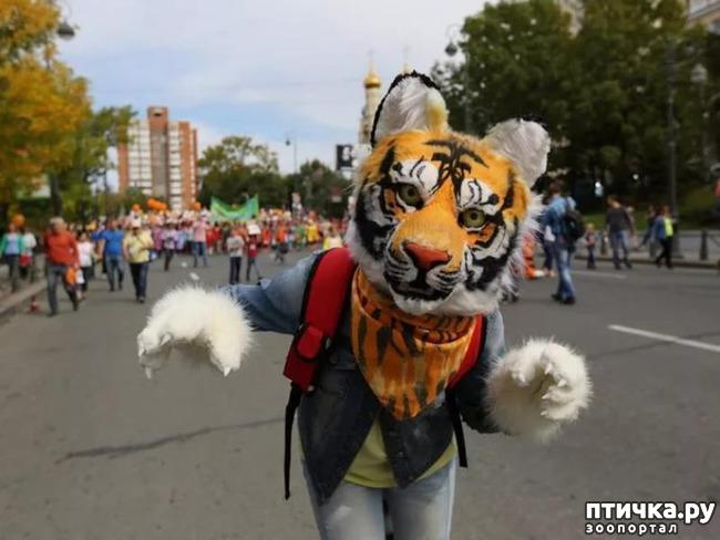 фото 3: Тигриный магнетизм
