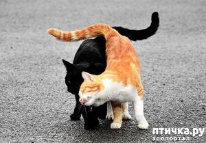 фото: Котоматрица по понедельникам. Коты и кошки