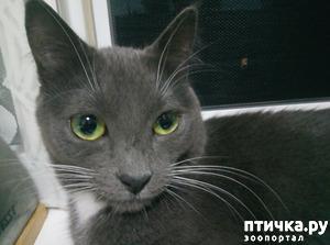 фото: Упрямый кот