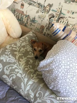 фото: Собака писает дома