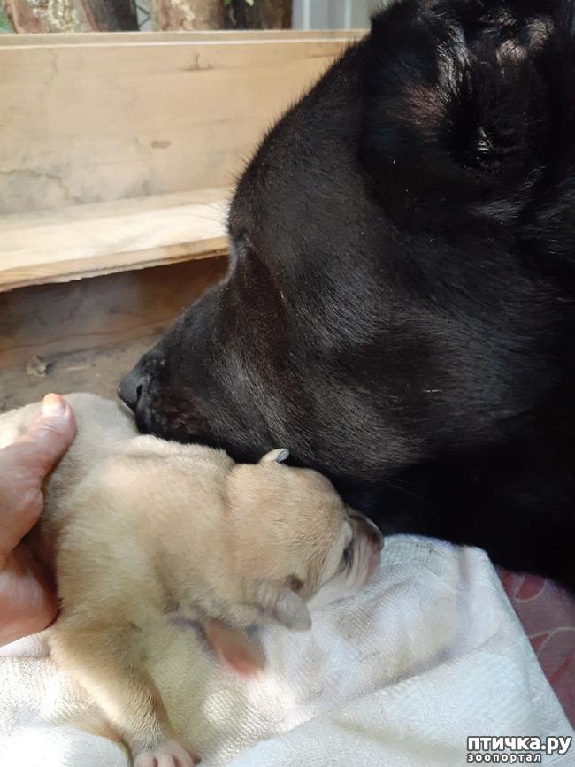 фото 1: Наш Лимончик стала мамой!