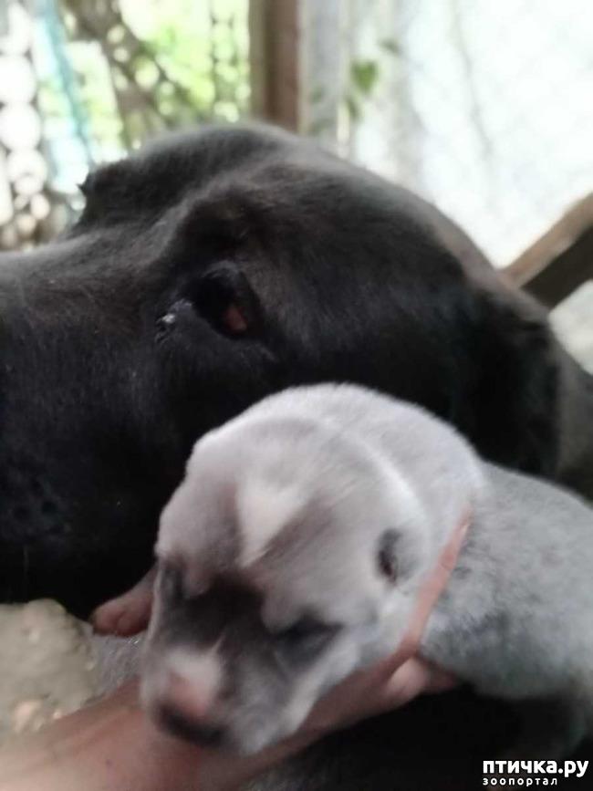 фото 5: Наш Лимончик стала мамой!