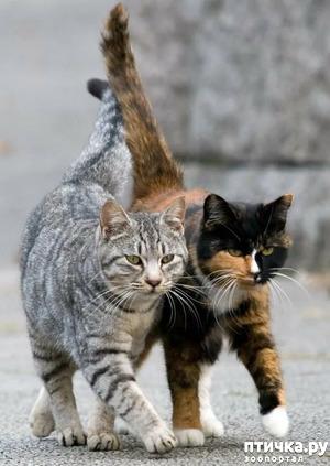 фото: К-2 или кошачья работа!