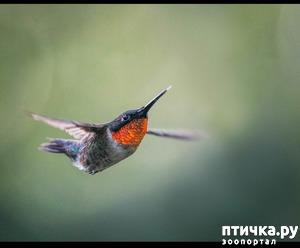 фото: Лети, орёл, лети!