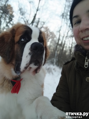 фото: Переходный возраст у собак