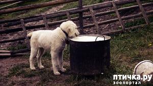 фото: Молочное в собачьем рационе.