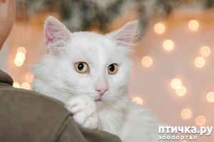 фото: Отдам в хорошие руки кошку