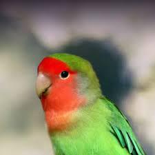 фото: Мои любимые попугайчики