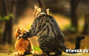 фото: Притча о кошачьем счастье