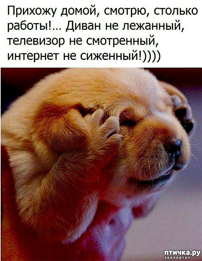 фото 1: Улыбнитесь, друзья!