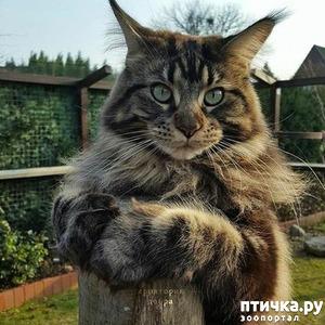 фото: Кот не признал своё отцовство (скандал в благородном семействе)