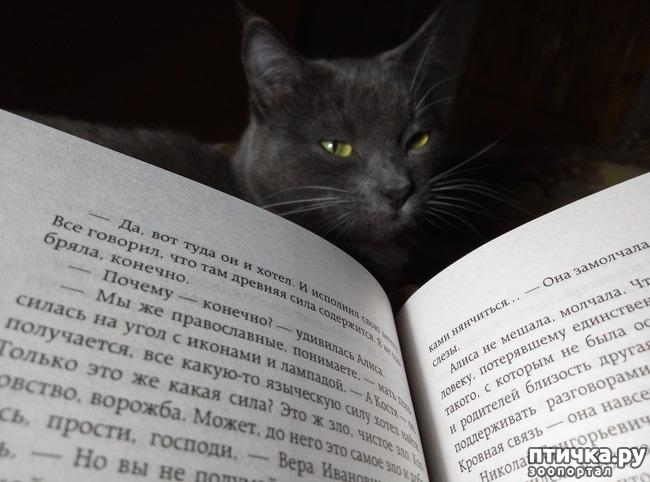 фото 1: Сказка на ночь