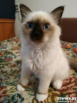фото: Ничего лишнего! Котенок, как средство...