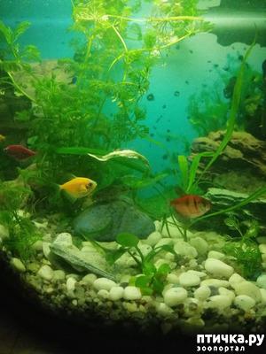 фото: Мой аквариум.
