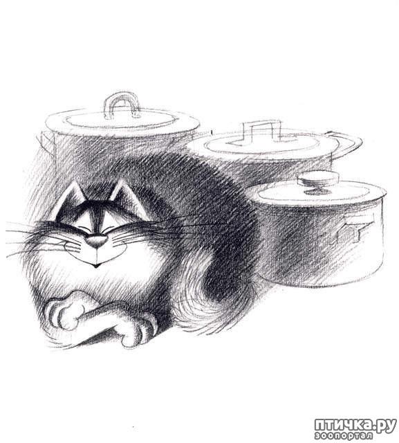 фото 13: Внимание, обнаружен новый котохудожник!