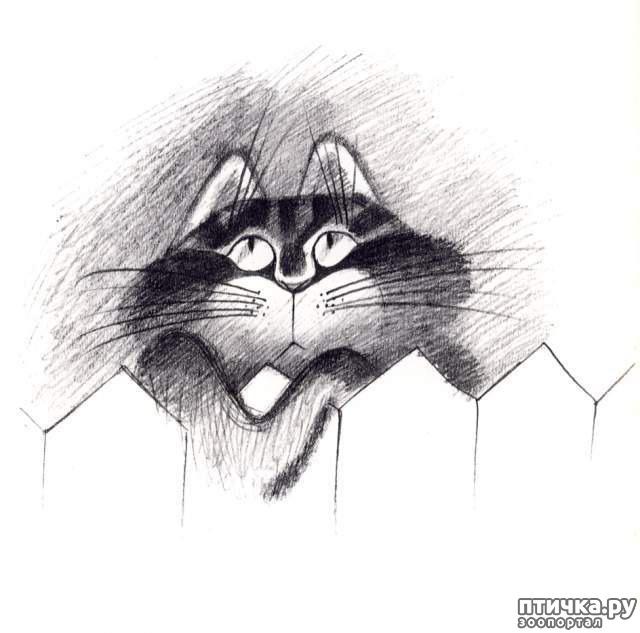 фото 14: Внимание, обнаружен новый котохудожник!