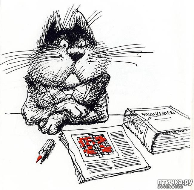 фото 17: Внимание, обнаружен новый котохудожник!