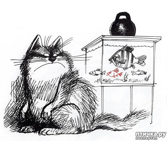 фото 18: Внимание, обнаружен новый котохудожник!