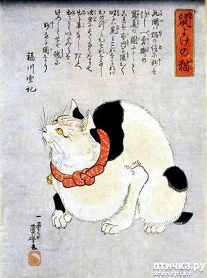 фото: День кошки... в Японии