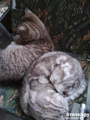фото: Так сладко спят
