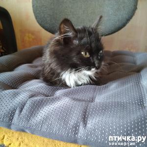 фото: Котята