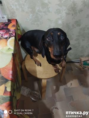фото: Проделки коротконогой собачки или Таинственное исчезновение холодца