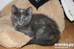 фото: Сказка о Молочке, овсяной Кашке и сером котишке Мурке