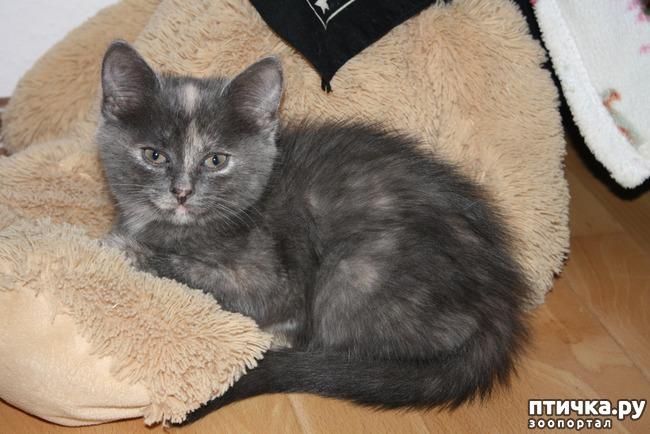 фото 1: Сказка о Молочке, овсяной Кашке и сером котишке Мурке