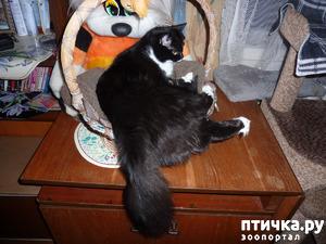 "фото: Из серии ""показалось"". А ведь тут два котика)))!"