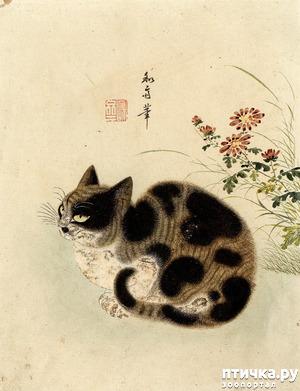 фото: Плотник и кошка