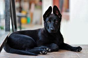 фото: Собачьи окрасы
