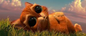 фото: Кот, как из Шрека - в реальности, а не в мультике!