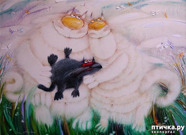 фото 10: Коты Валерия Хлебникова
