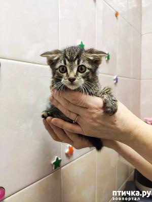 фото: Я маленький котёнок в этом большом мире