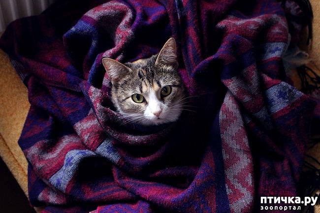 фото 3: Грипп у кошек и собак