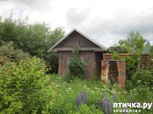 фото: Во саду ли, в огороде