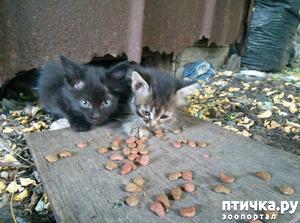 фото: Еще одни котята