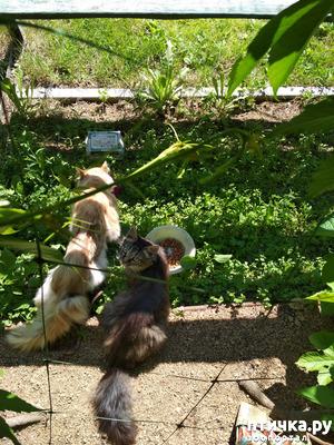фото: Котейки и ёжики в саду