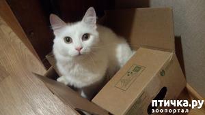 фото: Коты и коробки
