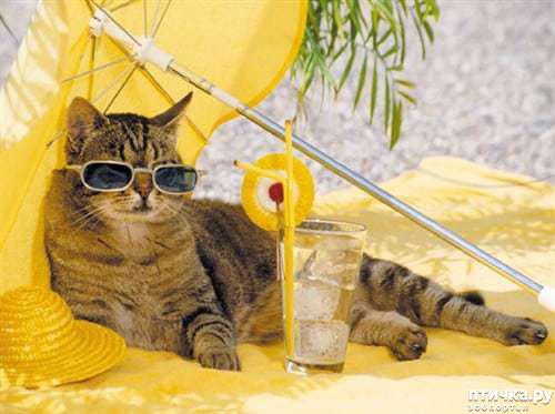 фото 1: Как помочь кошкам в летнюю жару