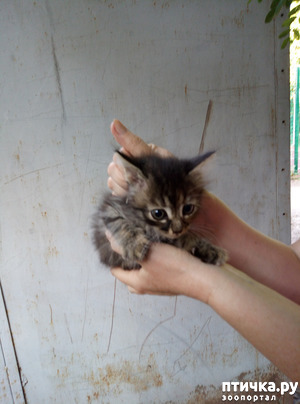 фото: Еще одна малышка нашла дом!