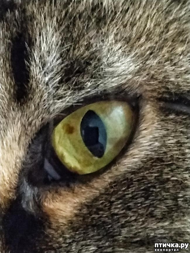 фото 2: Глаза - зеркало здоровья