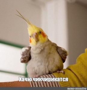 фото: Хочу завести попуга