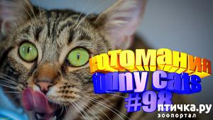 фото: Смешные коты | Приколы с котами | Видео про котов | Котомания #98
