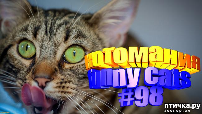 фото 1: Смешные коты   Приколы с котами   Видео про котов   Котомания #98
