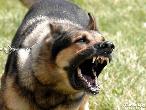 фото 1: Отчего кусают собаки? И как этого по возможности избежать.